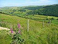 Foxglove and barbed wire - geograph.org.uk - 869580.jpg