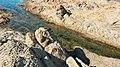 Güneyli Karanlıkdere Koyu - panoramio (8).jpg