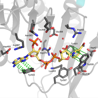 Glucose-6-phosphate dehydrogenase - Image: G6PD Structural site hydrophobic