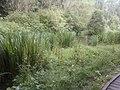 Gala Policies ( Pond) 19-072011 - panoramio.jpg