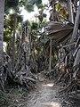Gambia06Bijilo0034 (5421097464).jpg