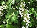 Gardenology.org-IMG 9948 rbgm10dec.jpg