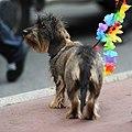 Gay pride 272 - Marche des fiertés Toulouse 2011.jpg