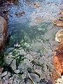 Gelo autunnale e sorgenti termali alla Mola di Oriolo.jpg