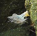 Genoa - aquarium 10.jpg