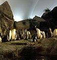 Gfp-king-penguins.jpg