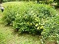 Giardino di Ninfa 125.jpg
