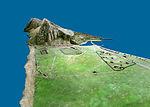 Gibraltar Model 1865 (22).jpg