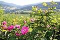 Glatzer Land, Sommer.jpg