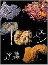 Global-Diversity-of-Sponges-(Porifera)-pone.0035105.g006.jpg