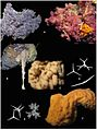 Global-Diversity-of-Sponges-(Porifera)-pone.0035105.g006.jpg