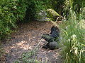 Gorilla, Kilimanjaro Safaris 2.JPG