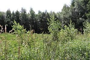 Gräser und Wildkräuter auf einer Magerwiese im Naturschutzgebiet Ohligser Heide.jpg