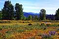 Grand Teton - panoramio (1).jpg