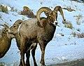 Grand Teton National Park (8478719539).jpg
