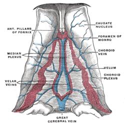 Internal cerebral veins - Wikipedia
