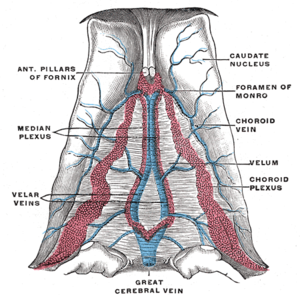Cerebellar veins - Veins and plexa of the cerebellum seen.