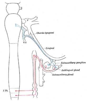 Submandibular ganglion - Parasympathetic connections of the submaxillary and superior cervical ganglia. (Submaxillary ganglion labeled at center right.)