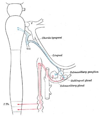 図5:顎下及び上頸神経節の自律神経の接続