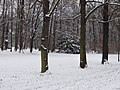 Großer Garten, Dresden in winter (1103).jpg