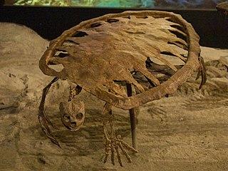 <i>Toxochelys</i> Extinct genus of turtles