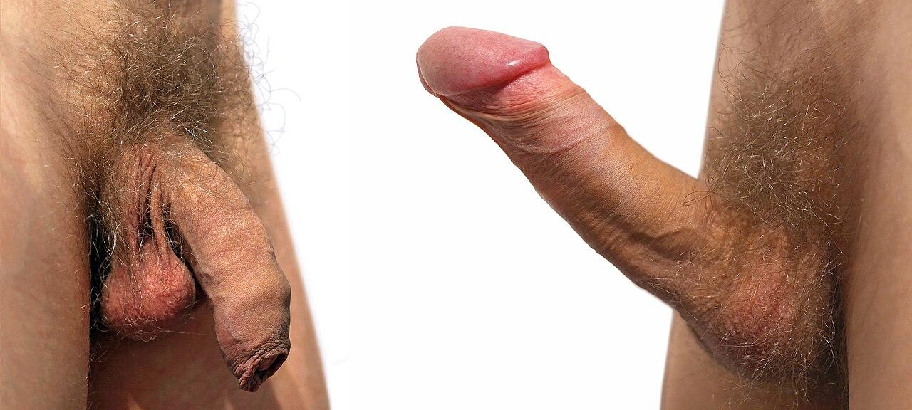 Girls who like uncircumcized penis