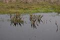 Hearst san simeon state park pond.jpg