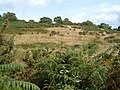 Heathland on Milber Down - geograph.org.uk - 231596.jpg