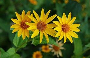گیاهان گلدار - ویکیپدیا، دانشنامهٔ ...
