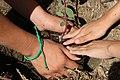 Helping hands (25843124444).jpg