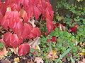 Herbstlaub in zuerich seebach.jpg