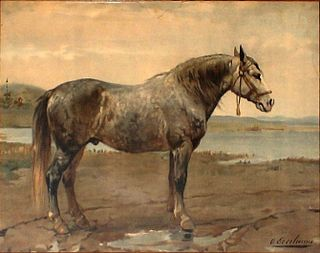 Russian Heavy Draft Russian breed of draught horse