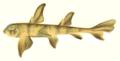 Heterodontus portusjacksoni NIE.png