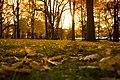 High Park autumn - panoramio (2).jpg