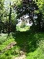 Hill Ground Spinney - geograph.org.uk - 442882.jpg