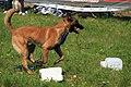 HiperParada animalelor la CORA (4552118684).jpg