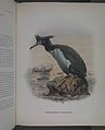 History of the birds of NZ 1st ed p338-2.jpg
