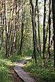 Holzöstersee Bretterweg.jpg
