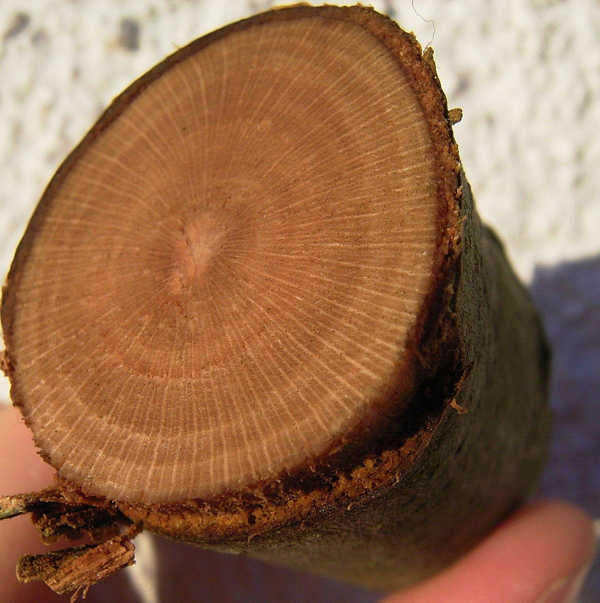 Holzstrahlen.jpg