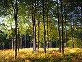 Hooke Park - geograph.org.uk - 558920.jpg