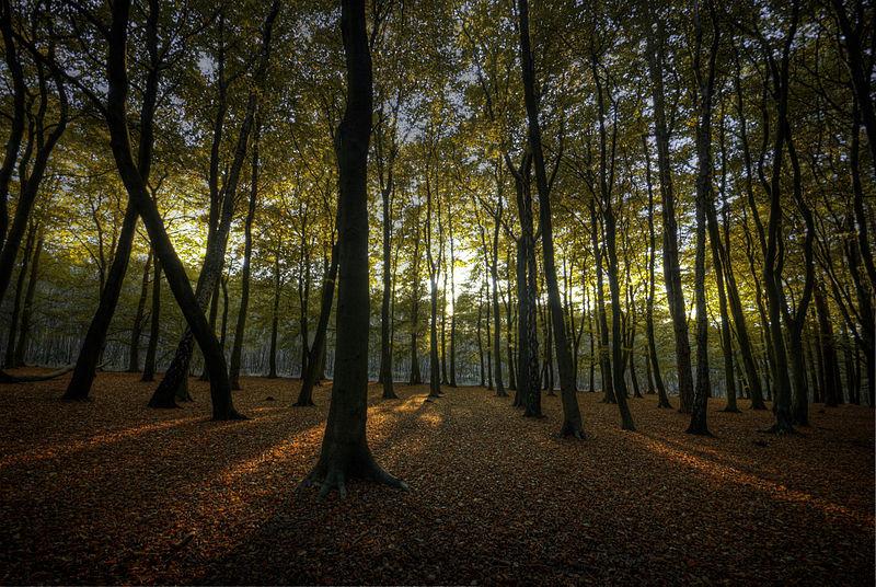 File:Hopwas Woods Sun.jpg
