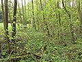 Horní luka, les s náletem.jpg