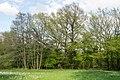 Horn-Bad Meinberg - 2015-05-04 - LIP-004 Naptetal (11).jpg