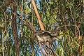 Huairavo Walking In The Trees (98360487).jpeg