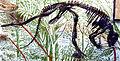 Hypsilophodon2.JPG