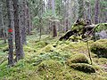 Igelsjöskogen 2017b.jpg