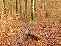 Im Wald - panoramio (4).jpg
