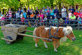 Im Wildpark Bad Mergentheim genießen auch die Nutztiere großes Interesse beim begeisterten Publikum. 11.jpg