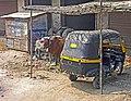 India-5870 - Flickr - archer10 (Dennis).jpg