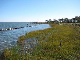 Holts Landing State Park - Shoreline of Indian River Bay at Holts Landing State Park